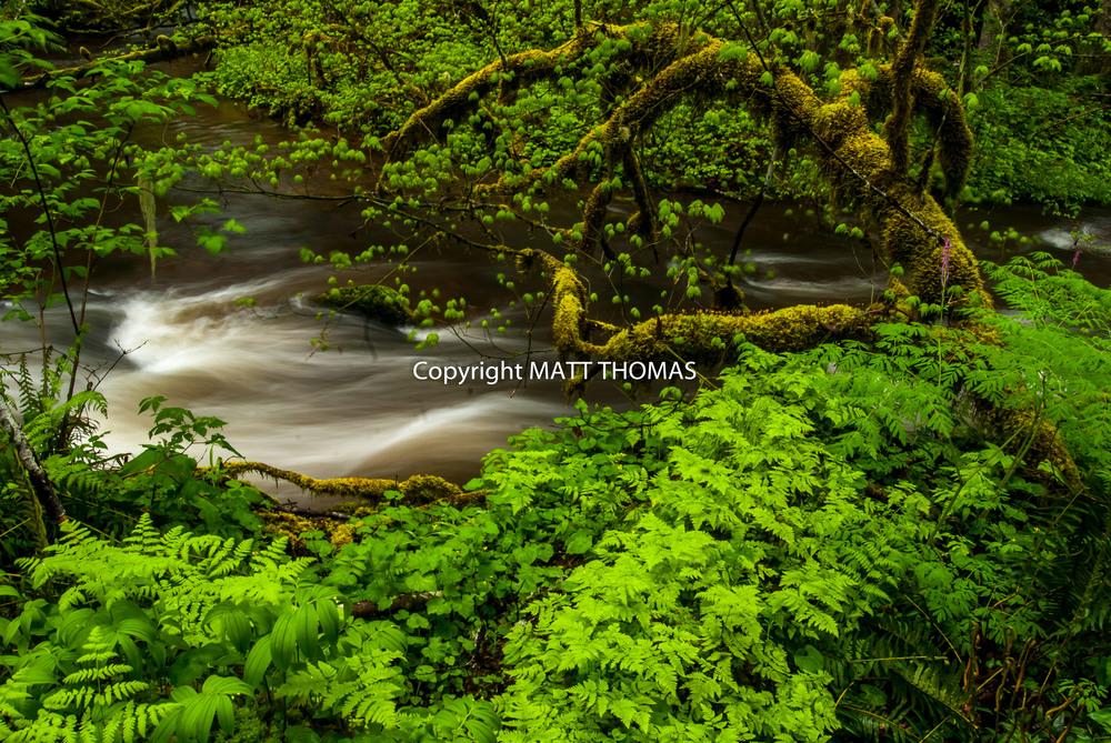 Flowing -Water, Tree, Ferns