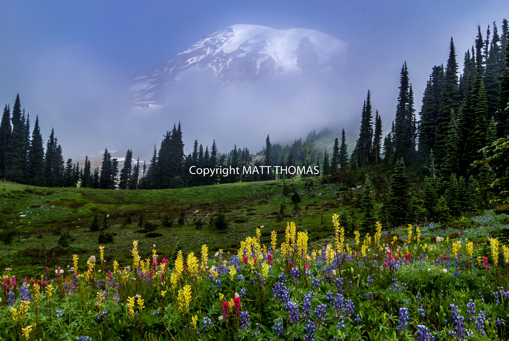 Mt. Rainier Flowers