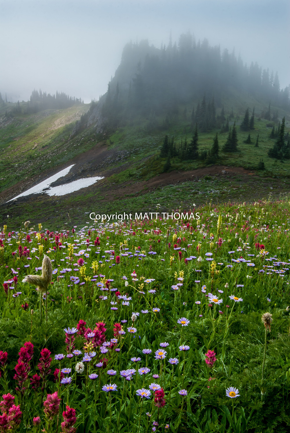 Mazama Ridge - Mt. Rainier N.P.