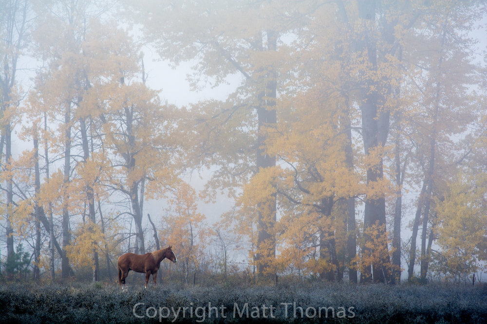 Misty Horse -2