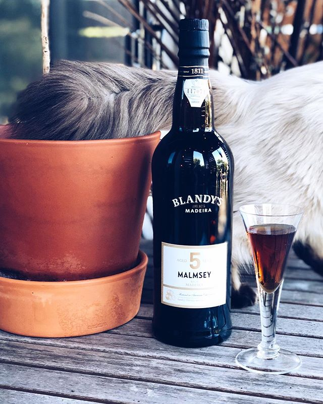 Having a glass of Malmsy on the porch with the cat. #madeirawine #sundayfamilyday