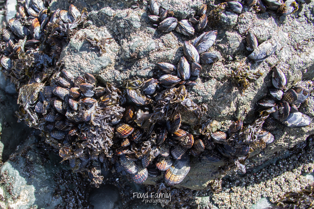 tidal pools with the kids | Placerville-Children-Photographer