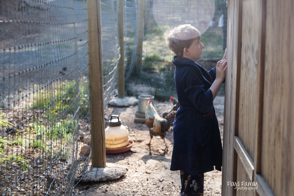 boy opening chicken coop |  Placerville Children Documentary Photographs