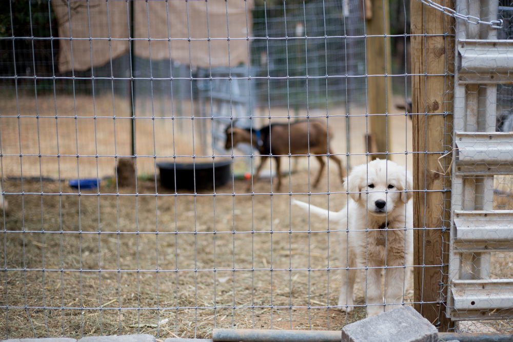 Cute puppy behind fence | Placerville-Children-Photographer