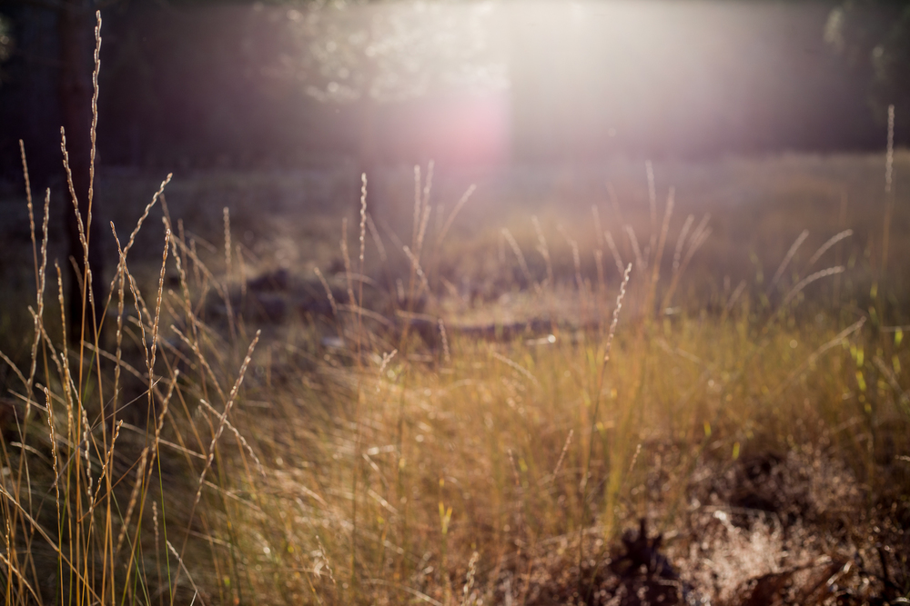 Pretty back-lit sun glare grass | Placerville-Children-Photographer