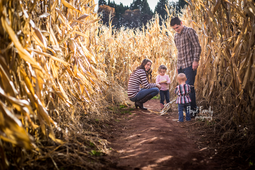 family walking through a corn maze in the fall