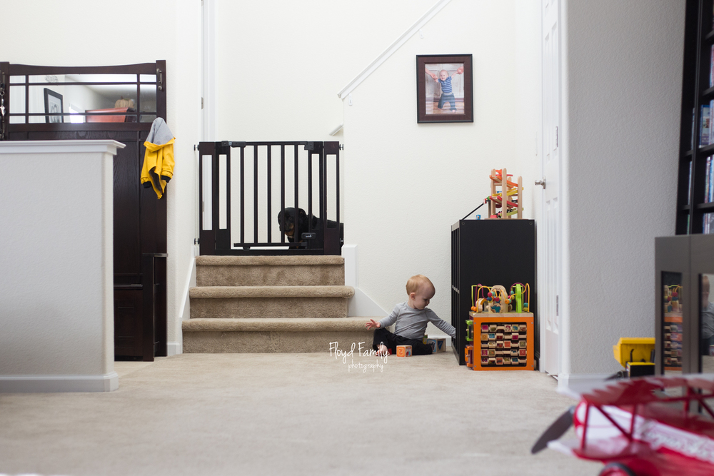 toddler sitting alone in large living room with dogs overlooking him