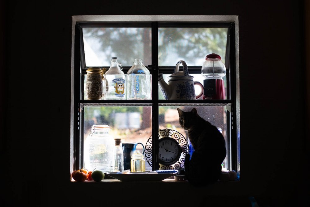 Cat sitting in a pretty kitchen window with lots of colorful objects and glass jars behind