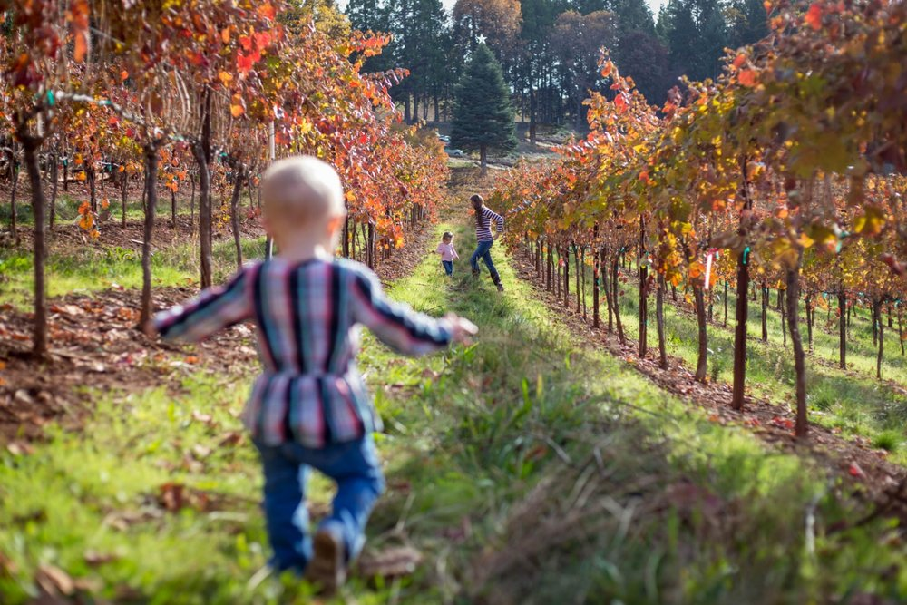 toddler girl trying to catch up with mom and sister in between rows at the winery with beautiful back lighting