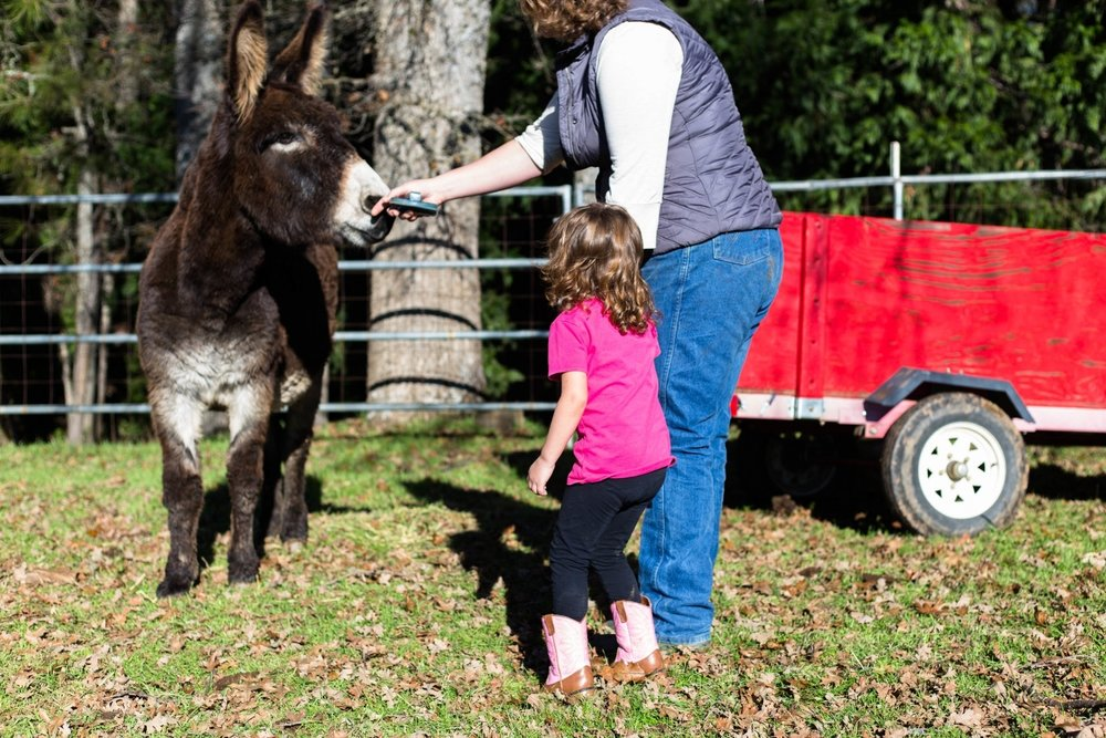 Mom and daughter feeding a donkey on the ranch