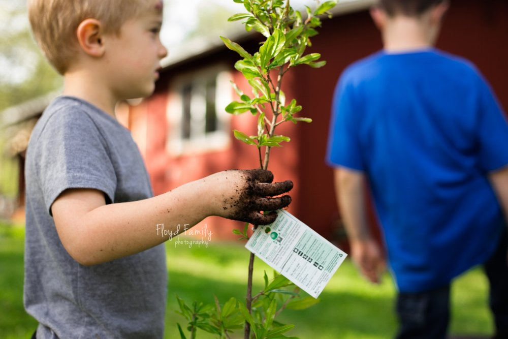Brothers helping in the garden by planting trees