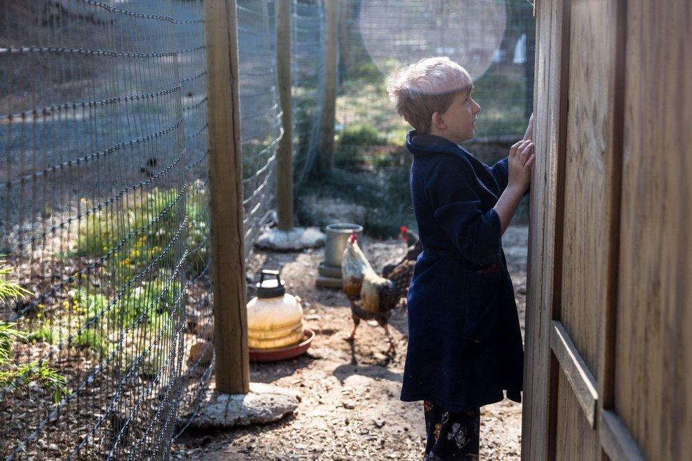 Boy feeding chickens on small farm in his pajamas | El Dorado Hills Everyday Photos