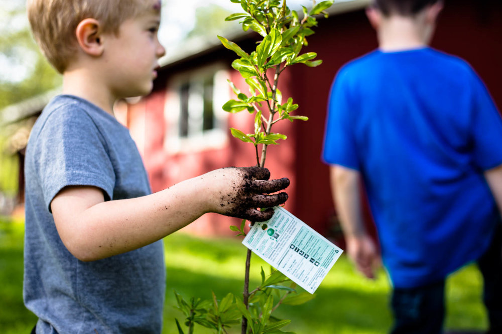 Young boy holding plant that he is about to plant in the garden.