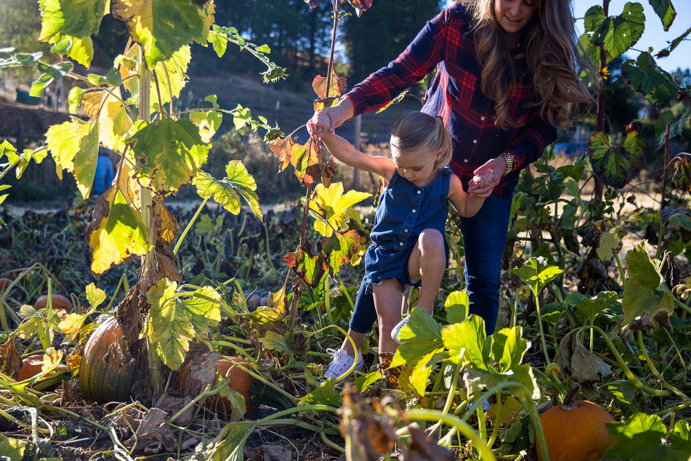 Mom and daughter walking through pumpkin patch leaves and over pumpkins on a fall day with the sun shining.