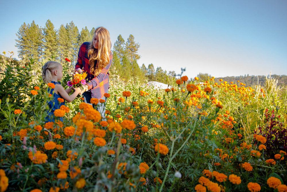 Mom and daughter exchanging flowers in a bright orange flower patch on a fall day at the pumpkin patch
