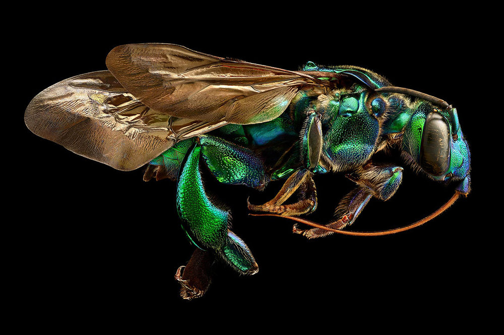 microsculpture-macro-photos-insects.jpg