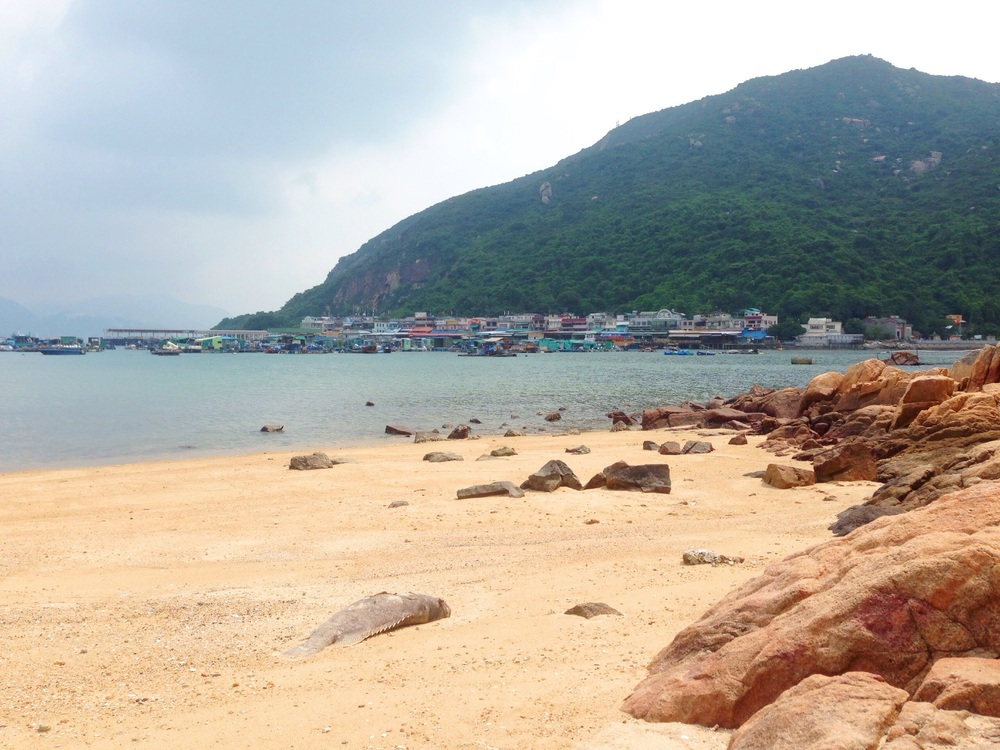 View to Sok Kwu Wan and Lamma Fisherfolk's Village + a big dead fish in the sand