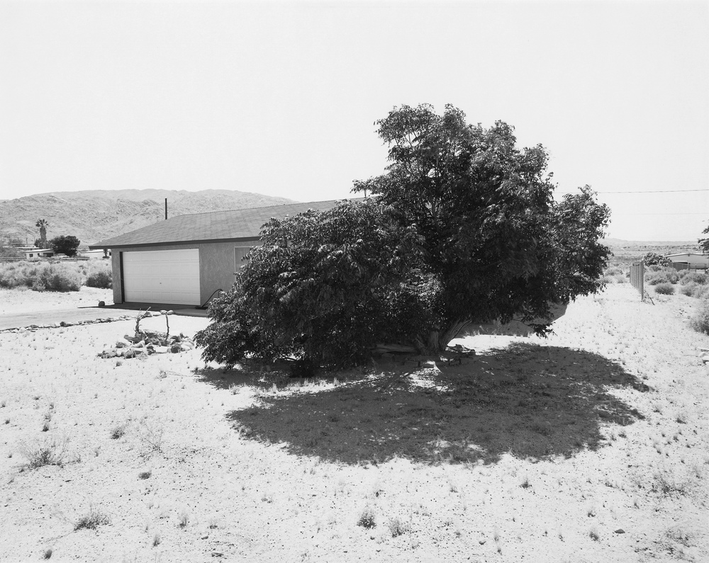 Joshua Tree #13