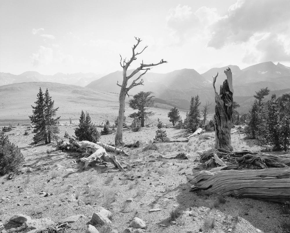 Bighorn Plateau #3