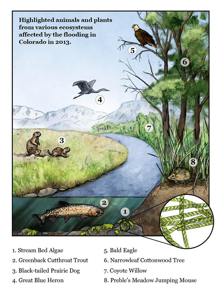 Colorado Riparian Ecology