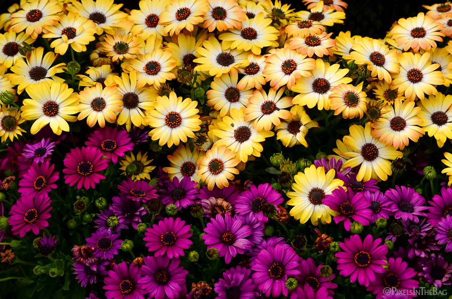 Yellow and purple flowers.