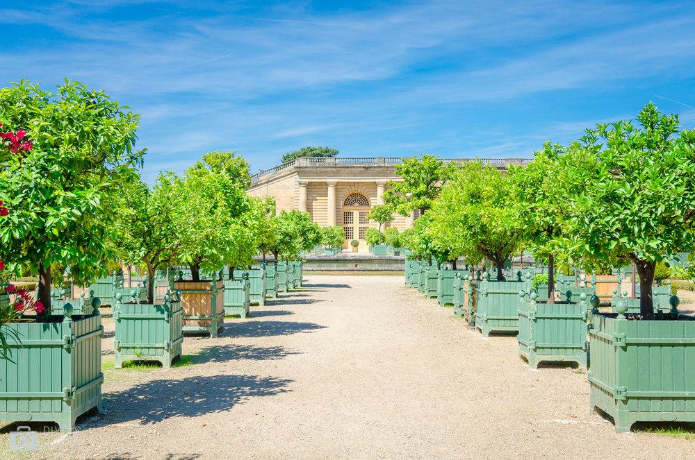 Construite entre 1684 et 1686 (par Jules Hardouin-Mansart), l'Orangerie se compose d'une galerie centrale longue de 150 mètres, prolongée par deux galeries latérales. Elle abrite aussi bien en été qu'en hiver un nombre important de palmiers, de lauriers, de grenadiers et d'oranges.