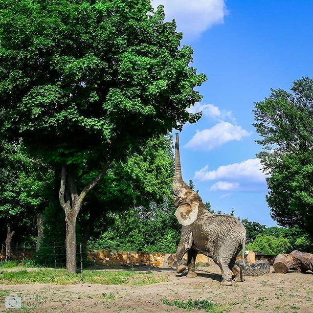 P r o c h e s | Ahh, ces superbes soirées en famille lors desquelles il pleut de souvenirs d'enfance avec quelques entremêlents de secrets de Polichinelle. À nous les têtes pleines d'anecdotes et de calories après un repas gargantuesque.  Et voici une photo d'un éléphant prise lors de notre visite au zoo de Varsovie.
