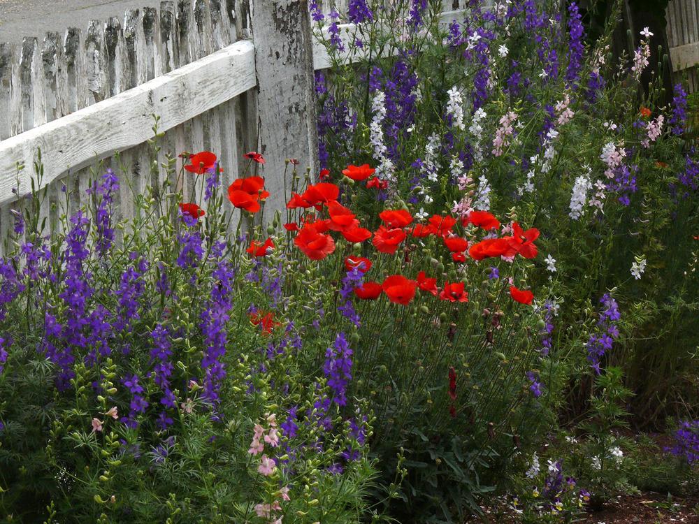 Old Salem Spring