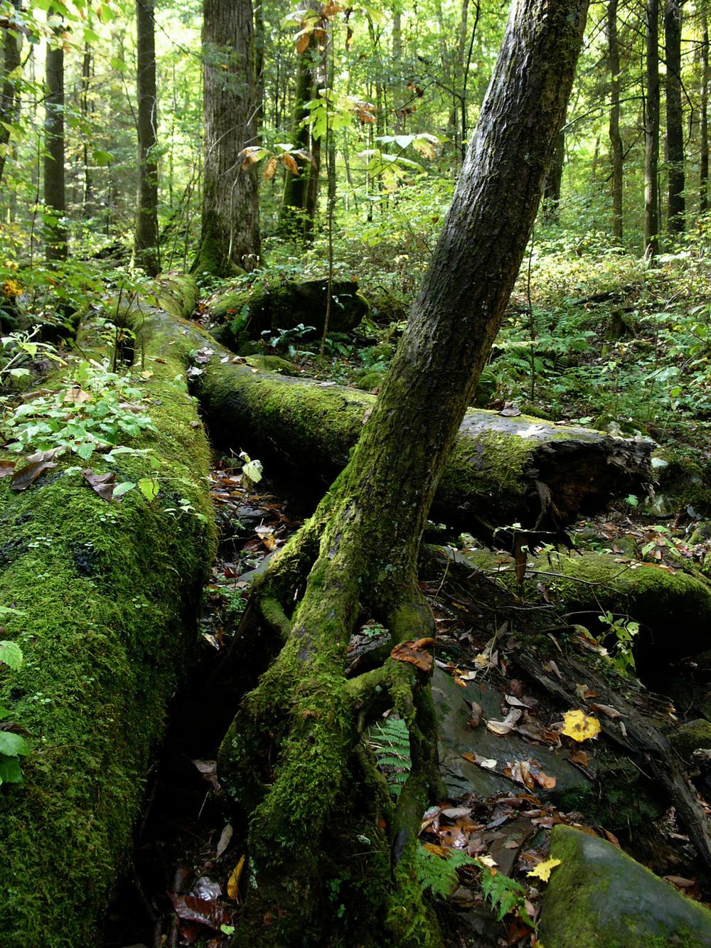 Kilmer Forest.jpg