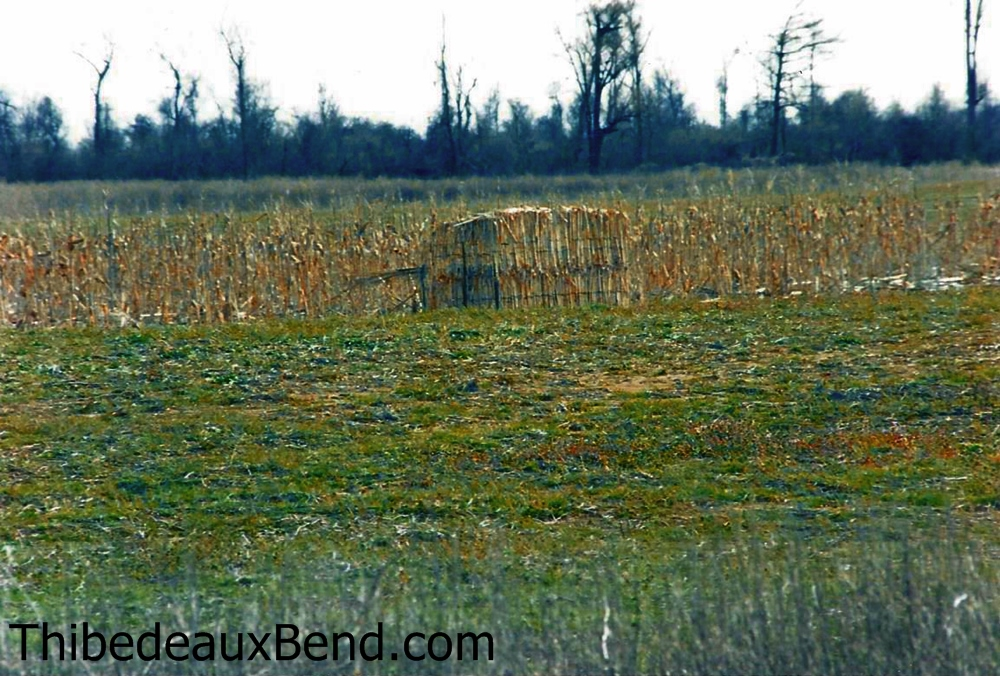 Thibedeaux Bend Duck Blind