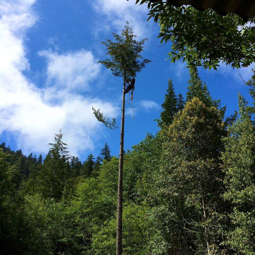 1 cabin trees 1.jpg