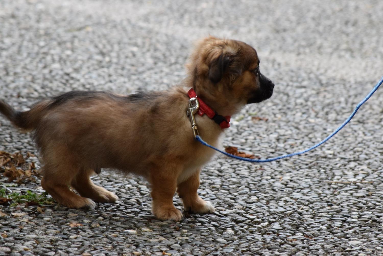 Hedendaags Blog | Hoboken | Dog Walkers | Dog Walking | Puppy Care | Hoby DK-22