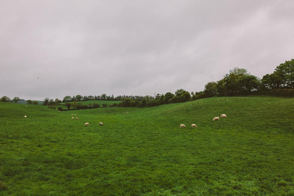20160519_IRELAND-46-2.jpg