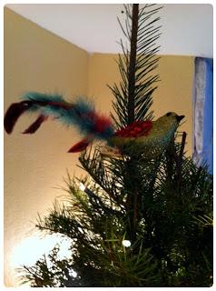 bird+feathers.jpg