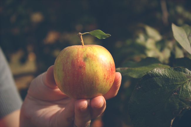 aamodt_apples_zipped2.jpg