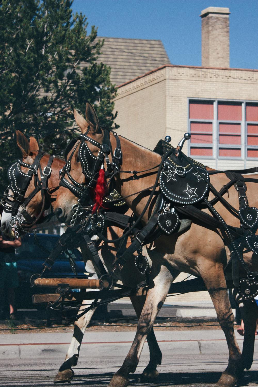 Cheyenne Frontier Days horses via truelane.png