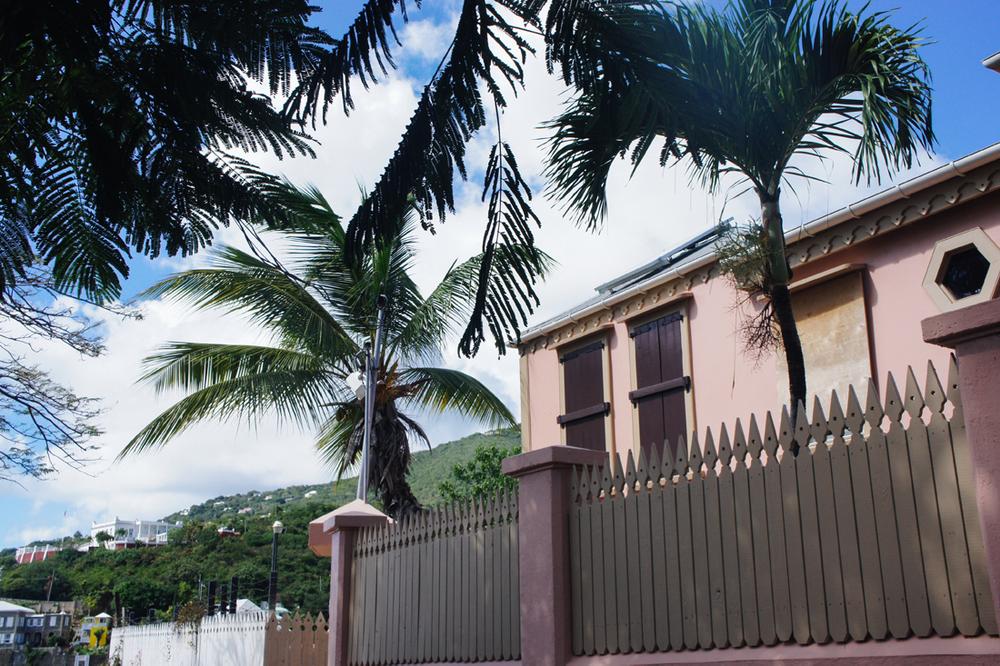 Palm trees in the Caribbean, St. Thomas | truelane