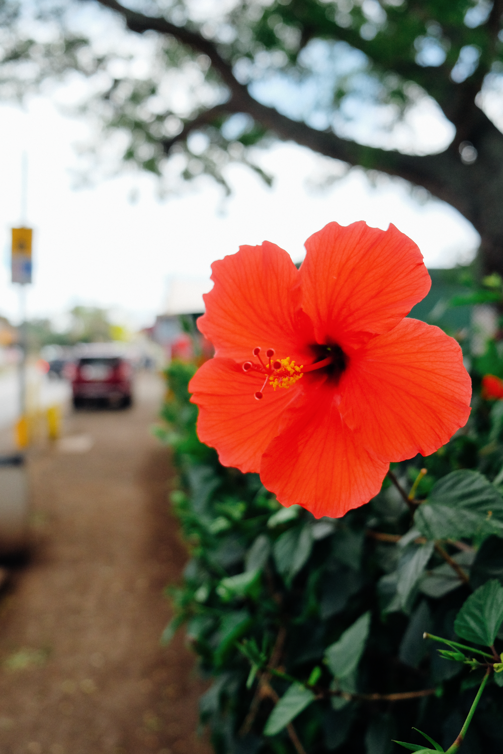 A Week on Oahu | truelane