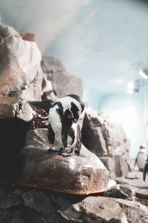 See Monterey: Monterey Bay Aquarium | truelane