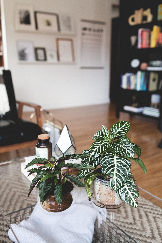 A Tour of My Seattle Apartment | truelane