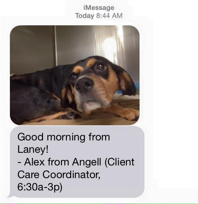 Sweet text from Angell Memorial when Laney had to stay overnight in July
