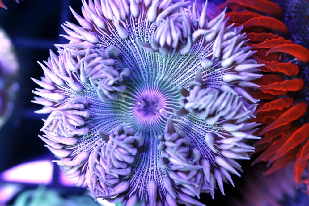 White Zebra Rock Flower Anemone $20-40
