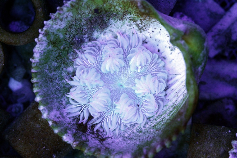 White Rock Flower Anemone $20-30