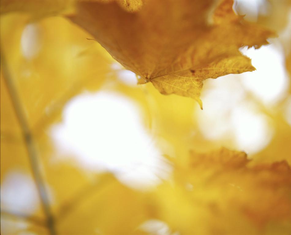 fall_008_950.jpg