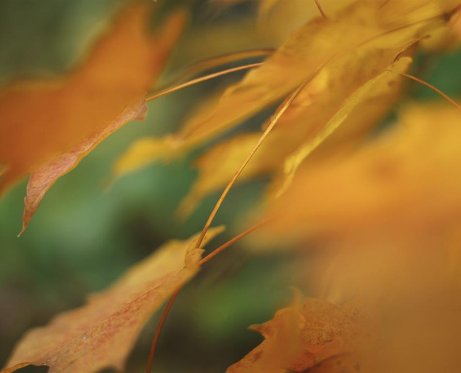 fall_009_950.jpg