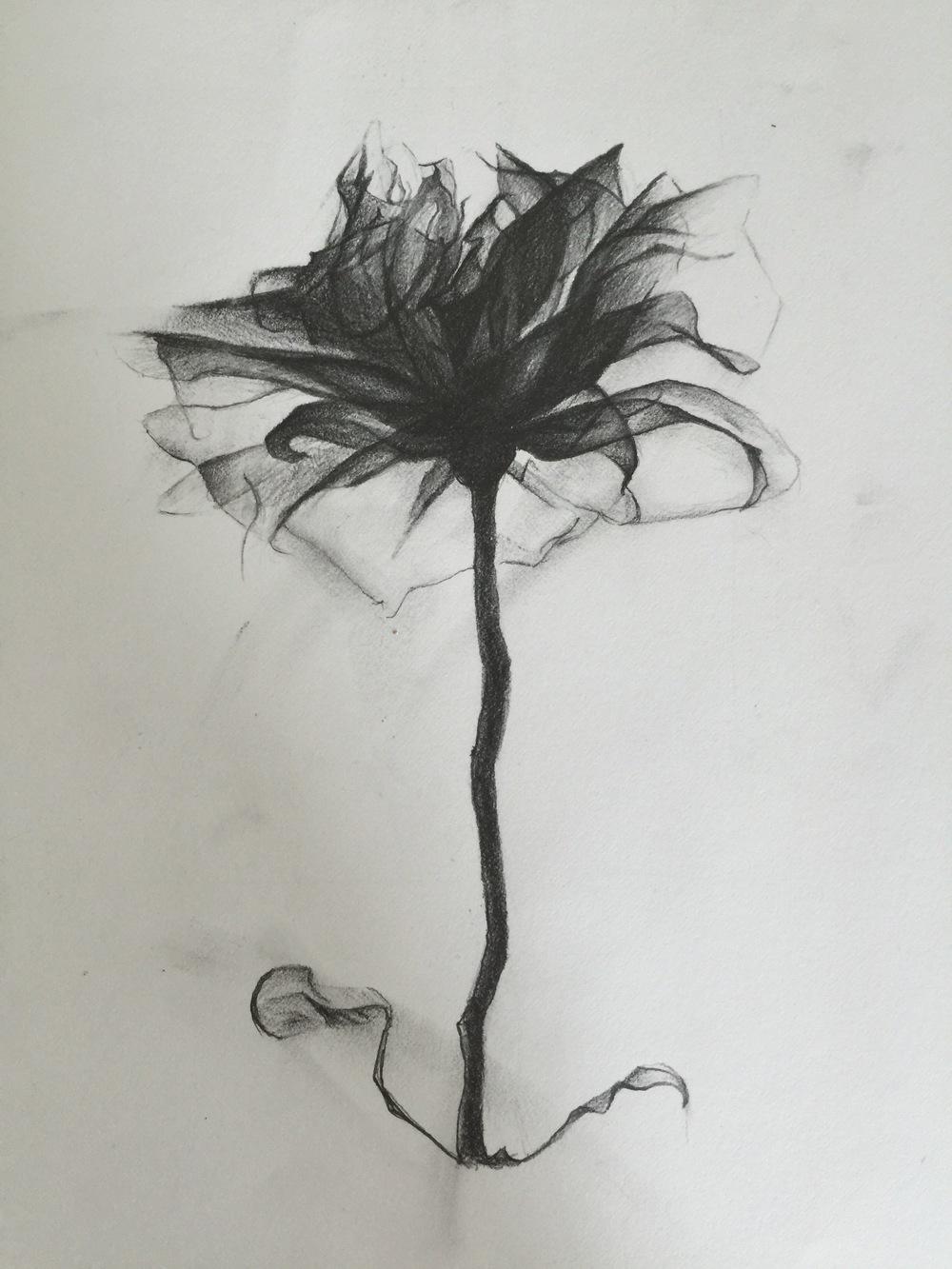 C-Thru(Sketch).jpg
