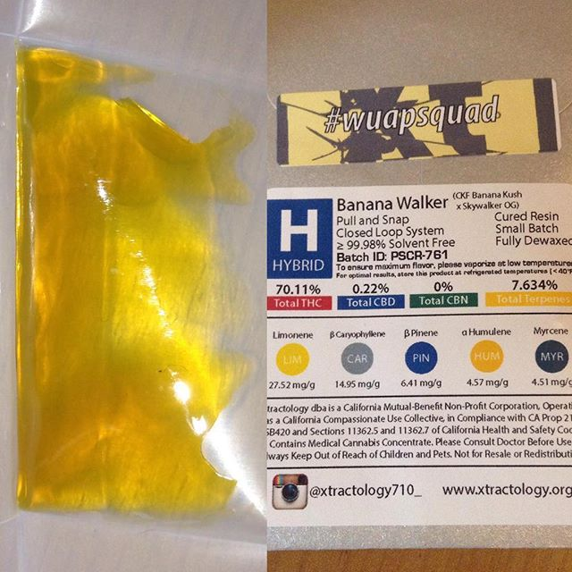 #TBT 📆 #Repost @ratfacekilla710 ・・・ Banana Walker @xtractology710__ @wuapsquad_extracts put me right to bed 🍌🚶🏻. #bananawalker #banana #whitewalkerog #og #xtractology #wuapsquadextracts #loud #loudpack #liveresin #wfayo #420 #dabbing #dabs #nugrunonly #terps #claritycounts #wedontsmokethesame #topshelfonly #high_larry_us