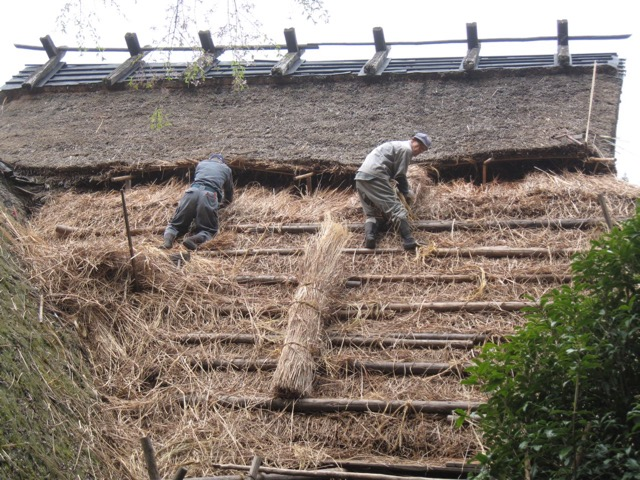 Re-thatching in Imadani