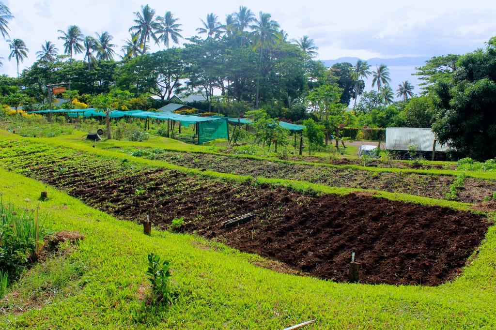 Nakia's terraced organic garden
