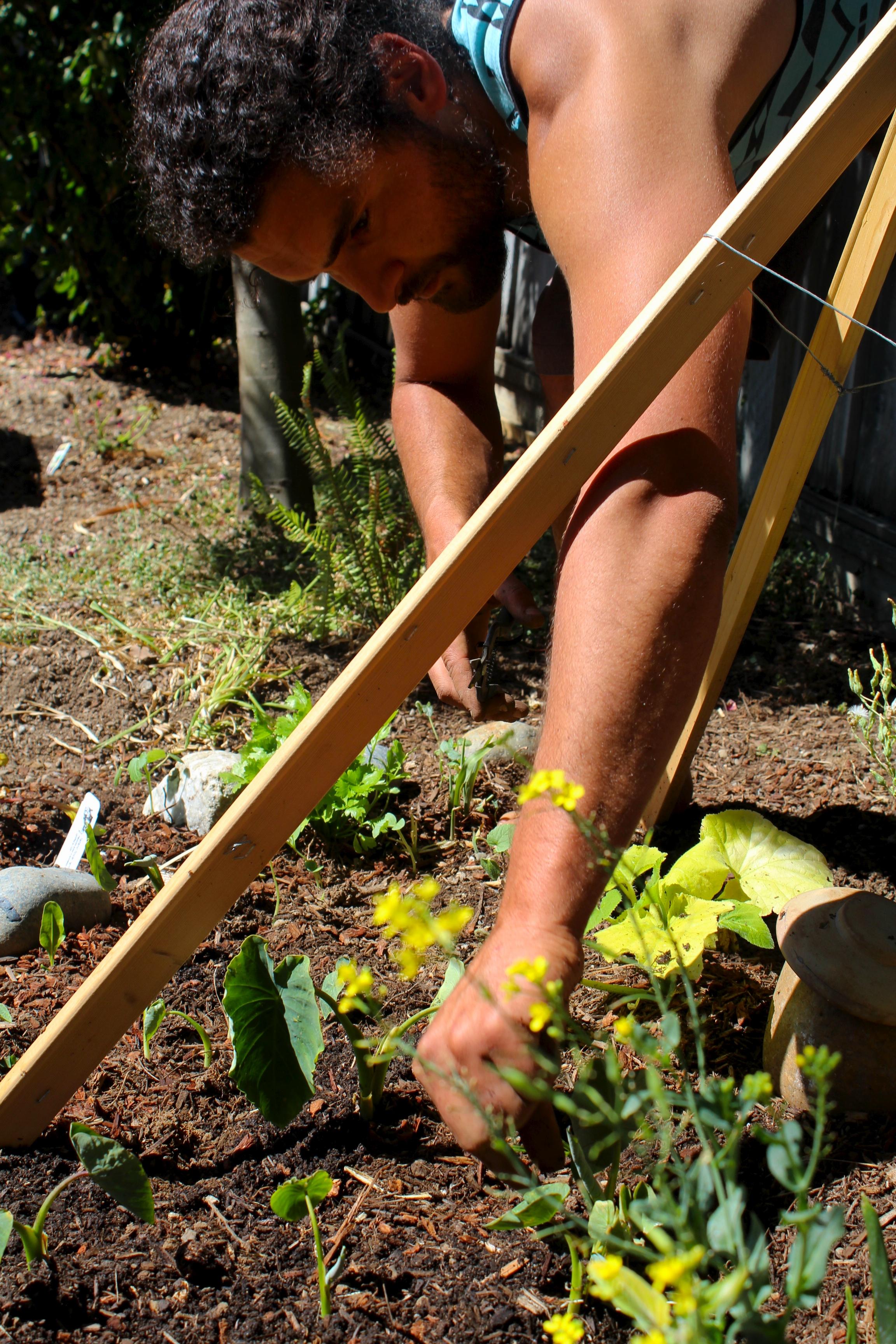 Jack planting Dalo